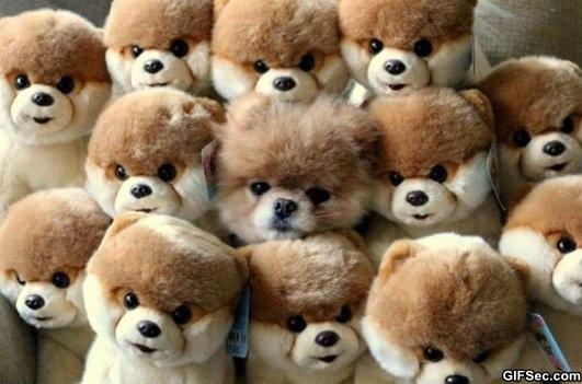 Ожидаем щенков
